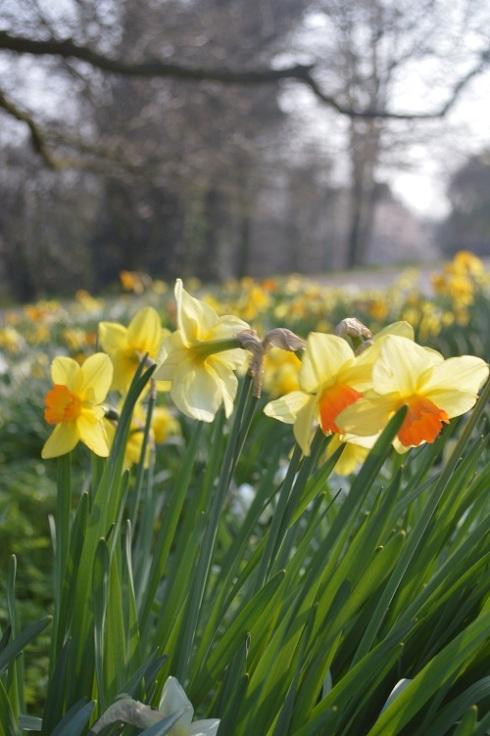 spring_nottingham_01