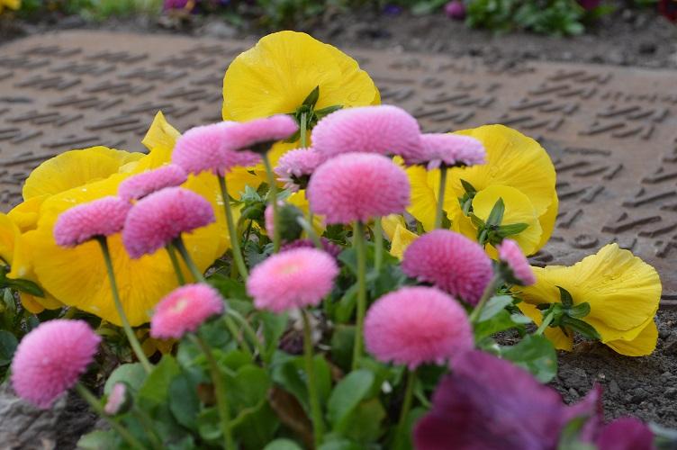 spring_nottingham_05