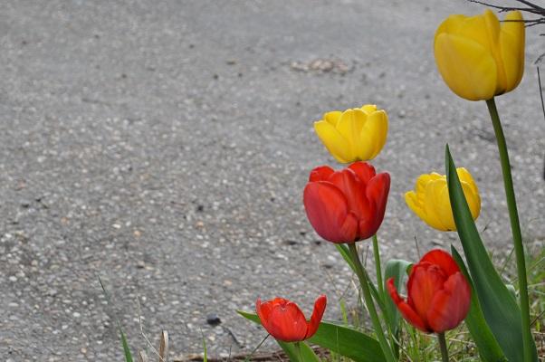 spring_nottingham_07