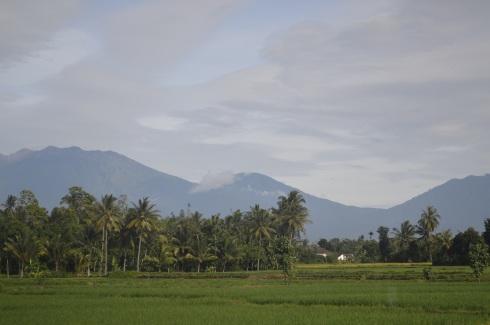 Hamparan padi, Lambaian Pohon Kelapa, Gunung Raung, Banyuwangi