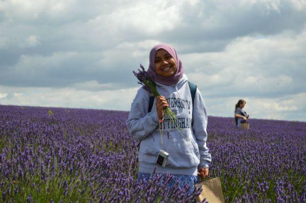 panen_gandum_lavender_4