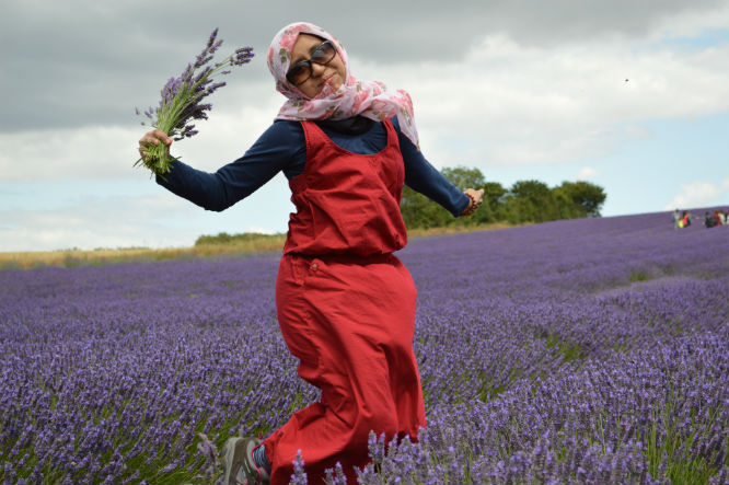 panen_gandum_lavender_5