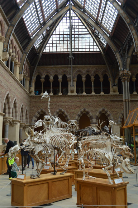 oxford_natural_history_museum