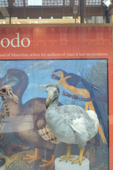 oxford_si_dodo