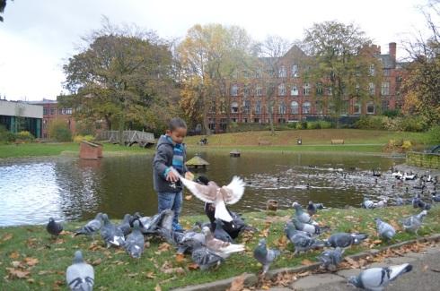 bebek_dan_burung_ditaman